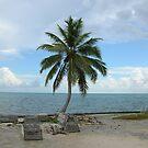Lone Palm Tree by Paul Lenharr II
