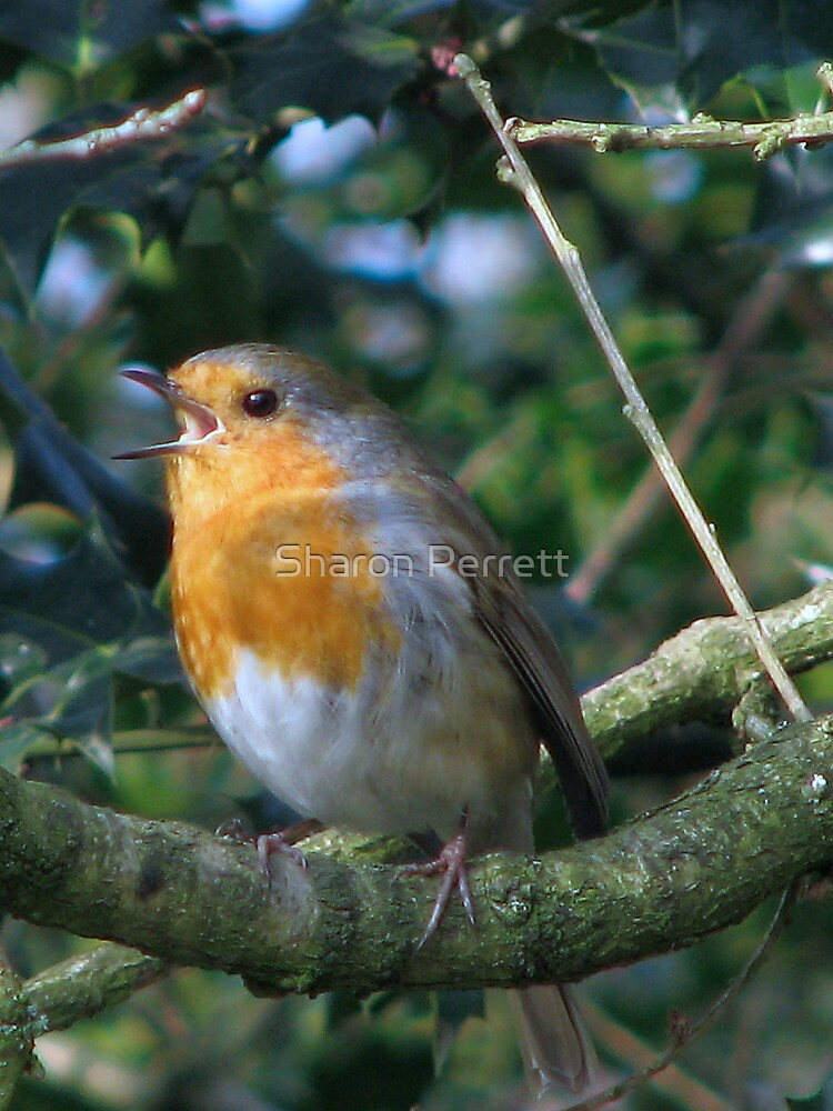 And the red,red robin was bop,bop,bopping along by Sharon Perrett
