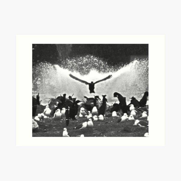 Fountain Birds Art Print