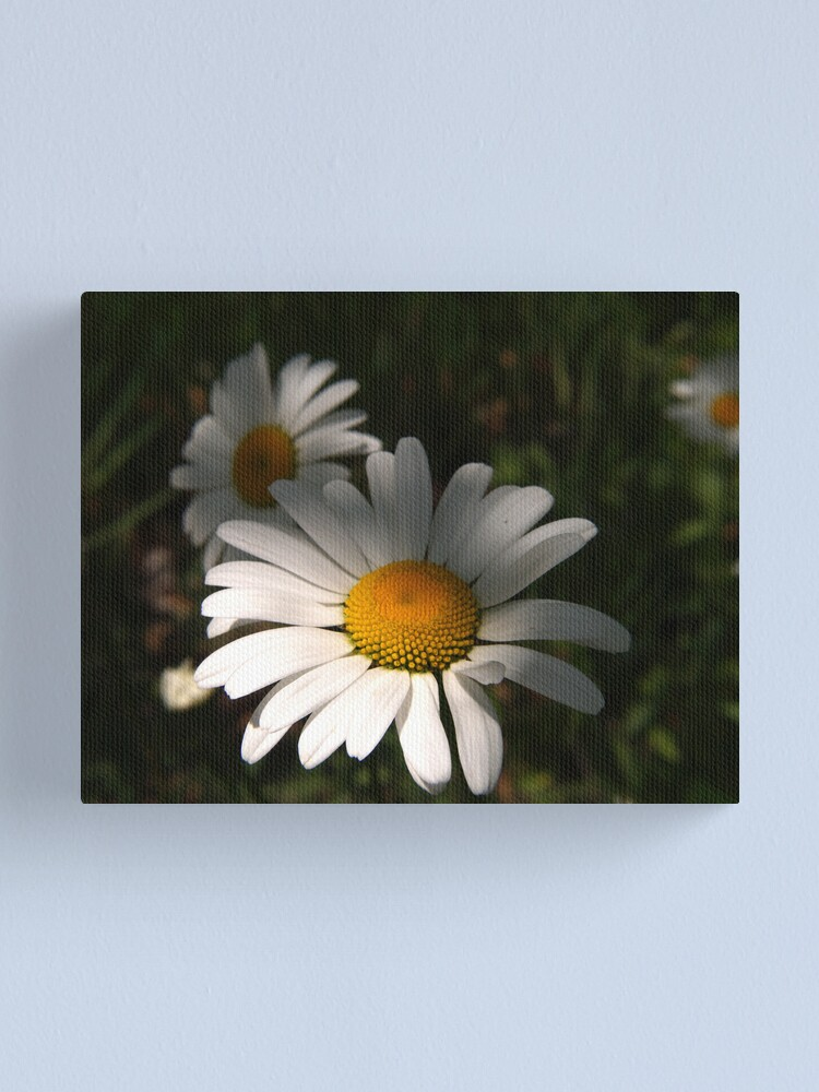 Alternate view of Daisys Canvas Print