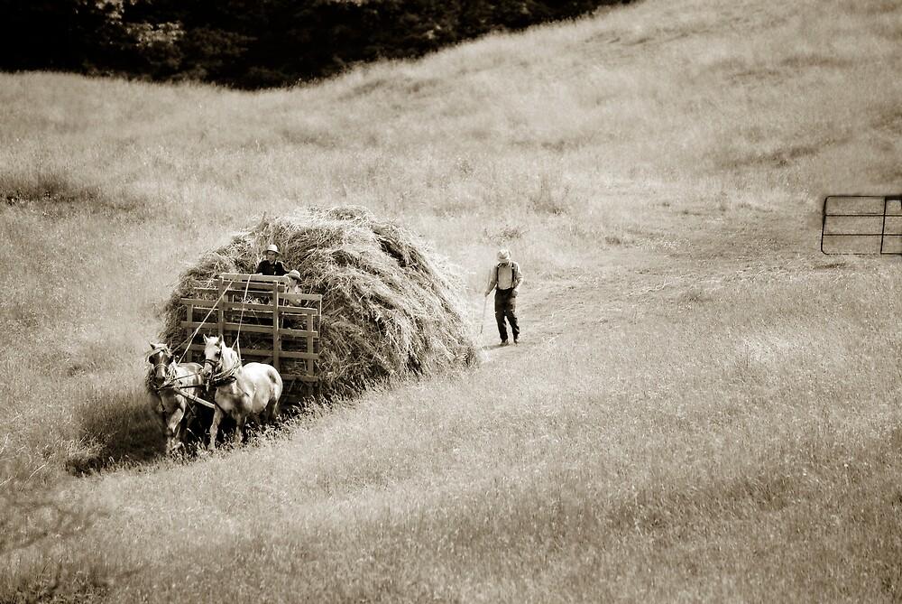 hayride by Lorne Chesal