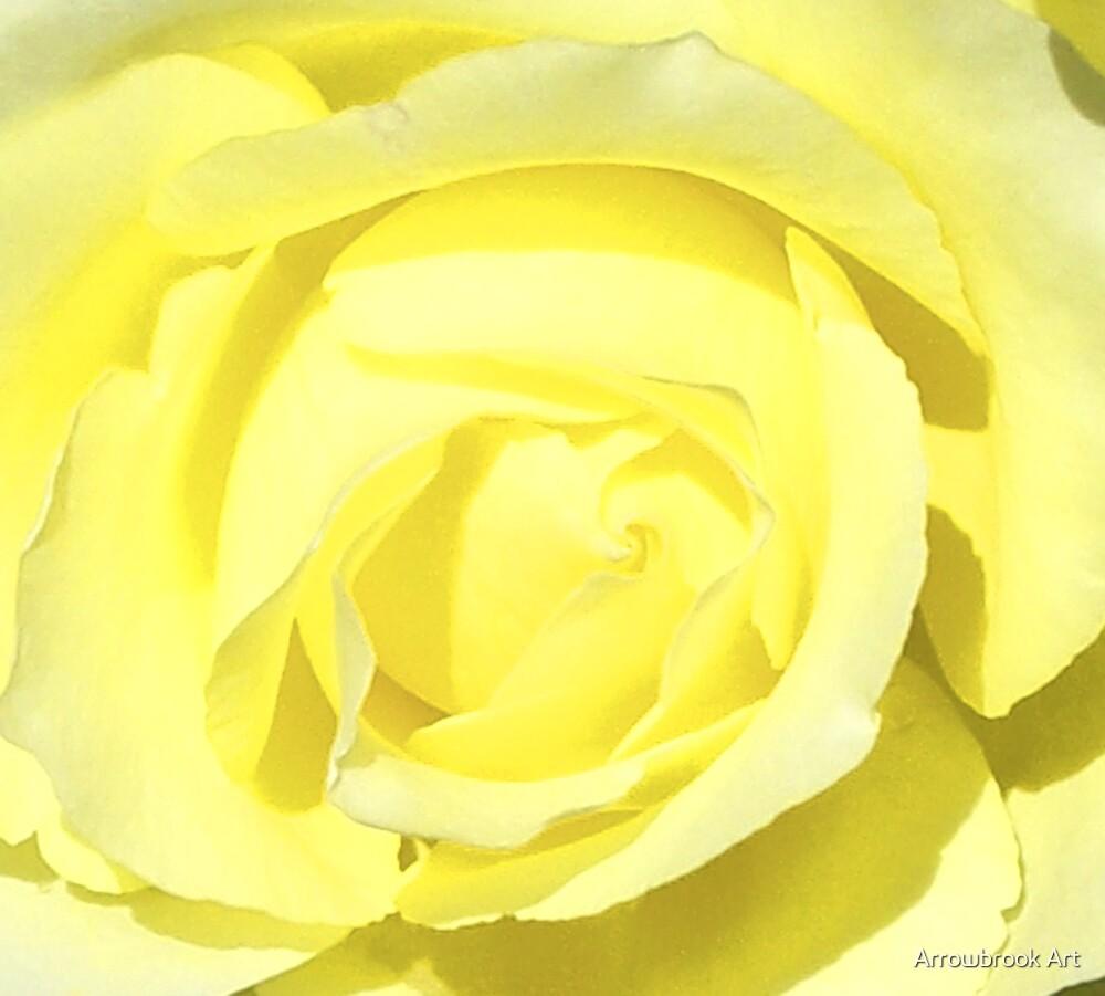Yellow Rose by John Brotheridge