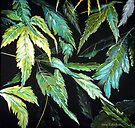 Maple Leaves - After the Rain  by Linda Callaghan