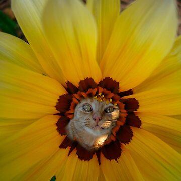 cattabush by shallay