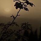 Sepia Sunset by Ashley Ng