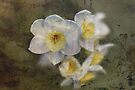 Beautiful Stone Jonquil Flowers by Joy Watson