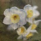 Beautiful Stone Jonquil Flowers by Joy Watson
