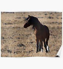 Stallion on Alert Poster
