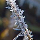 Crystal Twig by Andy Harris