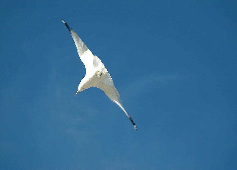 Flight by Jim Caldwell
