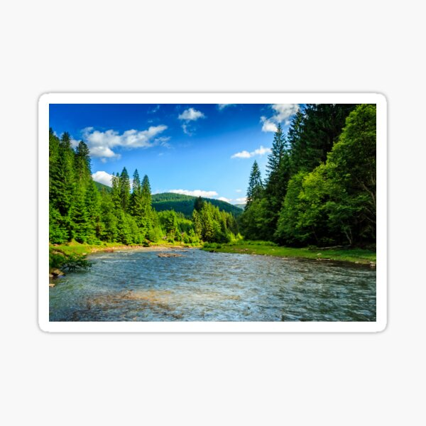 Mountain river among spruce forest Sticker