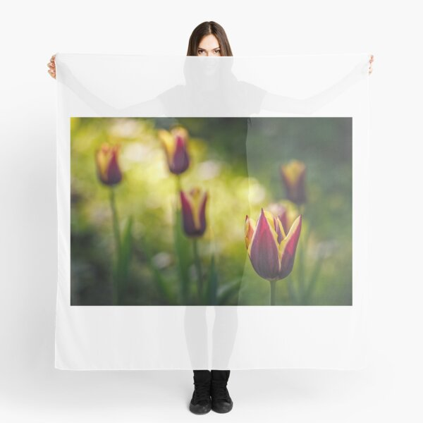 tulip with stripe on shady glade Scarf