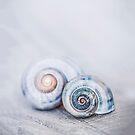 Romantic Blue Shells Close up by artsandsoul
