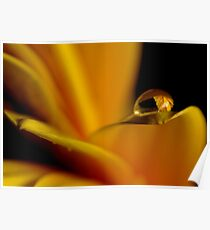 Yellow Water Droplet  Poster