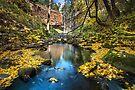 Trentham Falls in Autumn by Travis Easton
