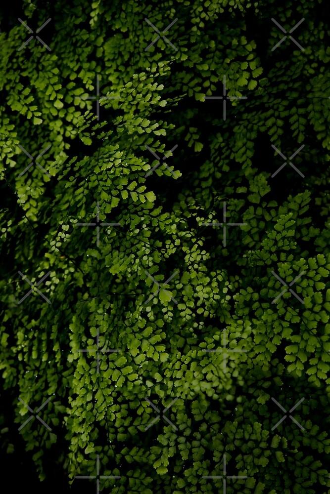 Kleine Blätter. von VanGalt