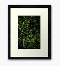 Small leaves.  Framed Print