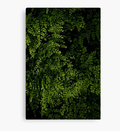 Small leaves.  Canvas Print