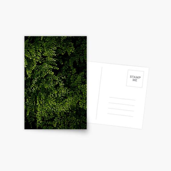 Small leaves.  Postcard