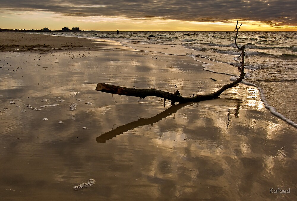 Reflective Driftwood by Kofoed
