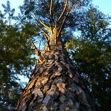 Tree by shanecox704