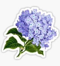 Sommer blaue Hortensie Sticker