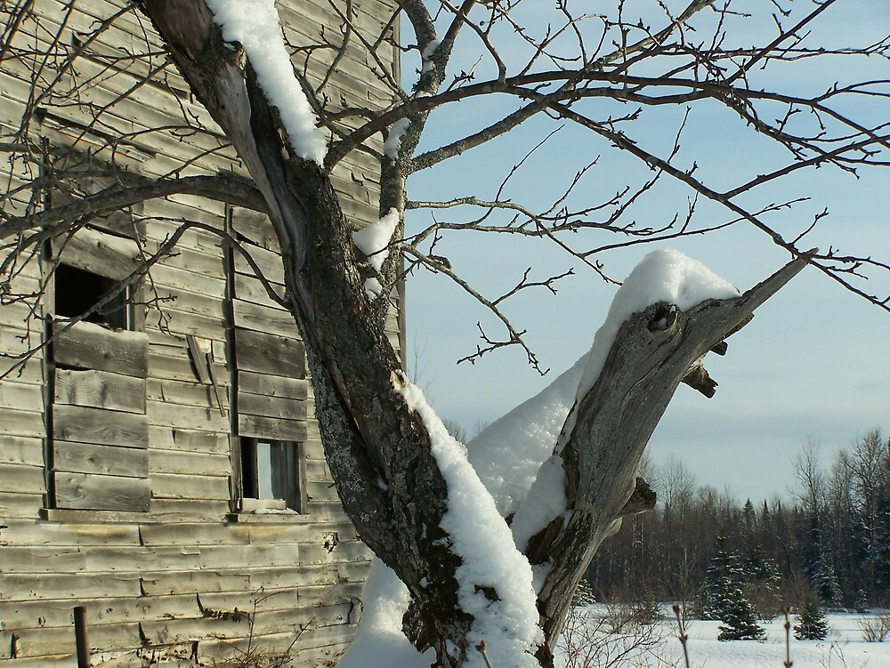 Old Home Old Tree by Gene Cyr
