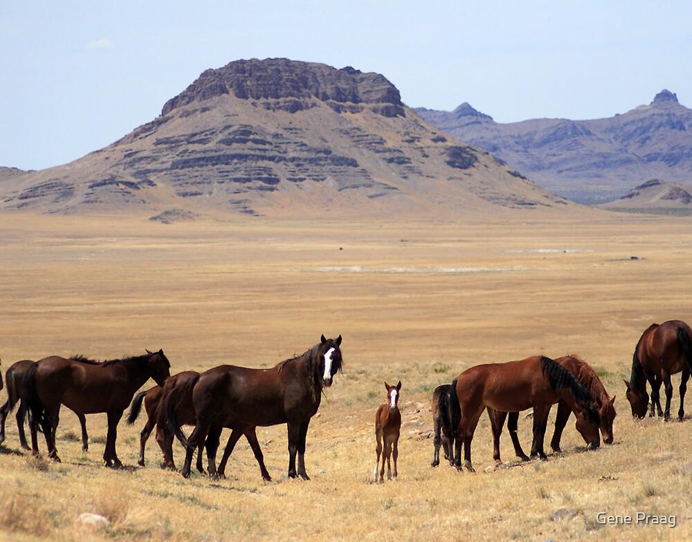 Valley of the Mustangs by Gene Praag