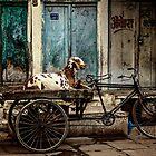 Goat on Wheels by Valerie Rosen