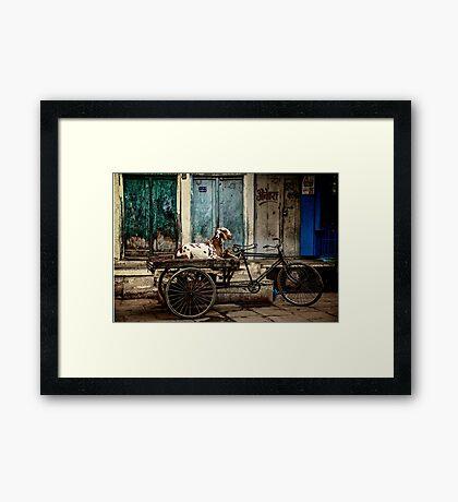 Goat on Wheels Framed Print