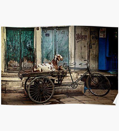 Goat on Wheels Poster