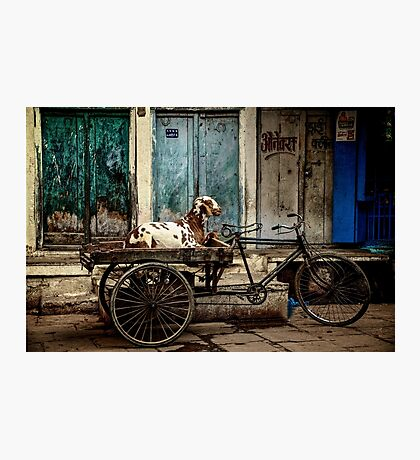 Goat on Wheels Photographic Print