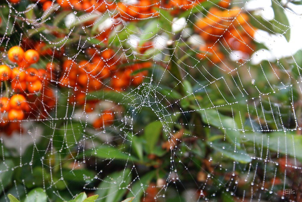 Dew on a Spider's Web by Eils