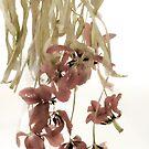 Tulips by Ann Garrett