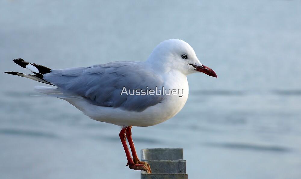 Balancing Act. by Aussiebluey