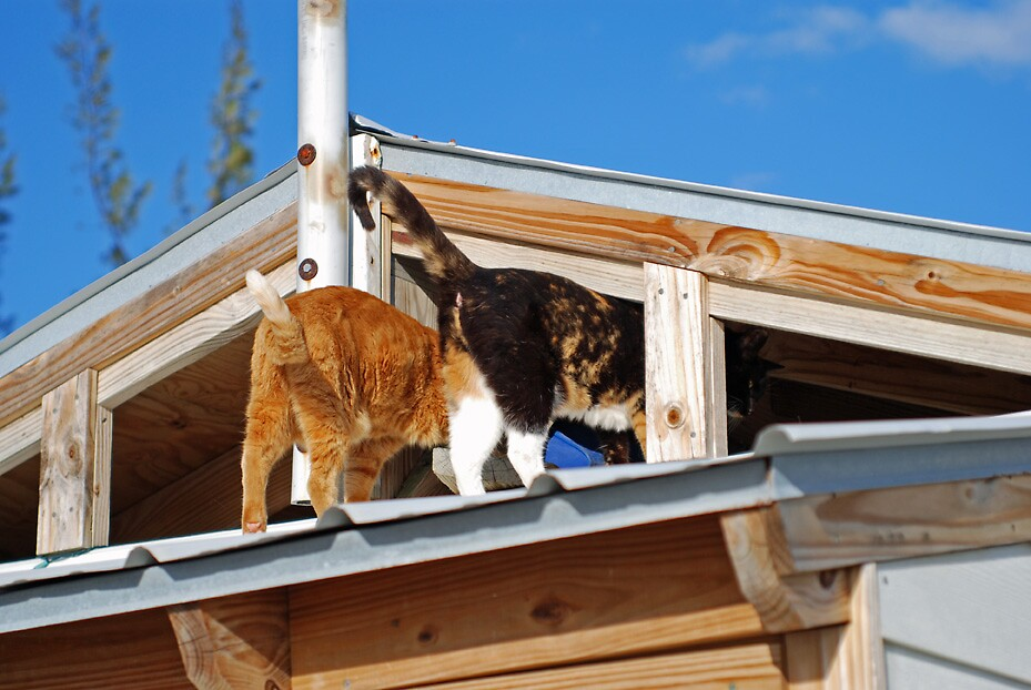 Cats on a hot tin roof by sarahjane71