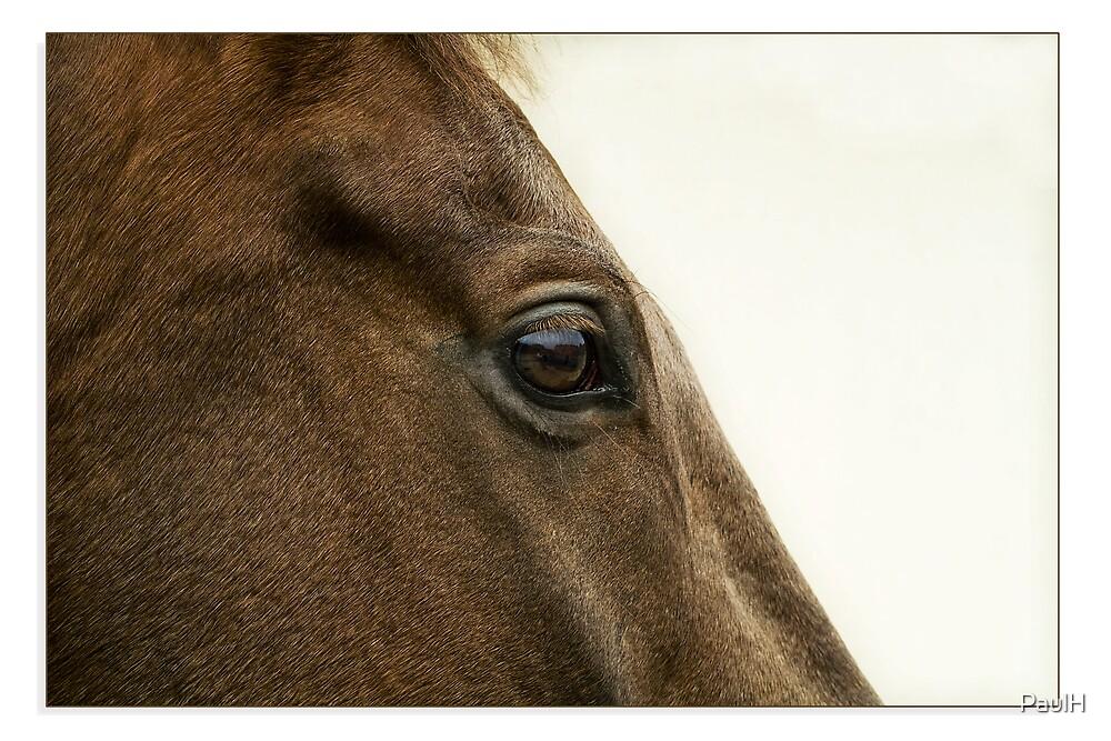 Eyeing a Winner by PaulH