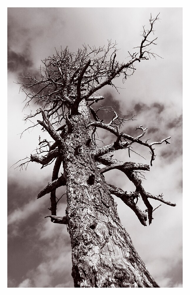 Spooky Tree by deahna