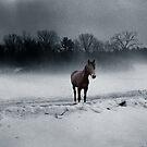 Quarterhorse in the Mist by Wayne King