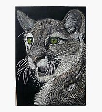 American Mountain Lion Photographic Print