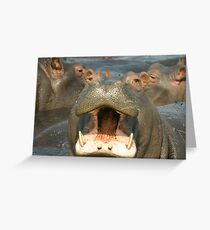 Hippo - Up Close and Personal Greeting Card