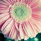 Gänseblümchen Gerbera von VanGalt