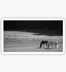 BW Horse landscape Sticker