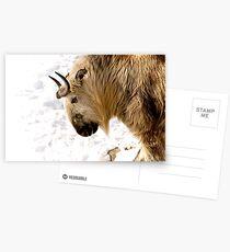 """""""Takin"""" It Slow Postcards"""