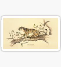 NATURAL HISTORY - Dinictis felina Sticker