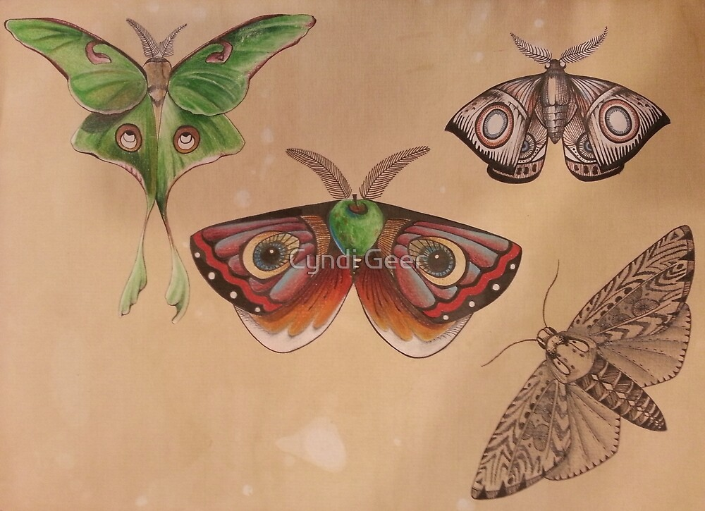moth collection by Cyndi Geer