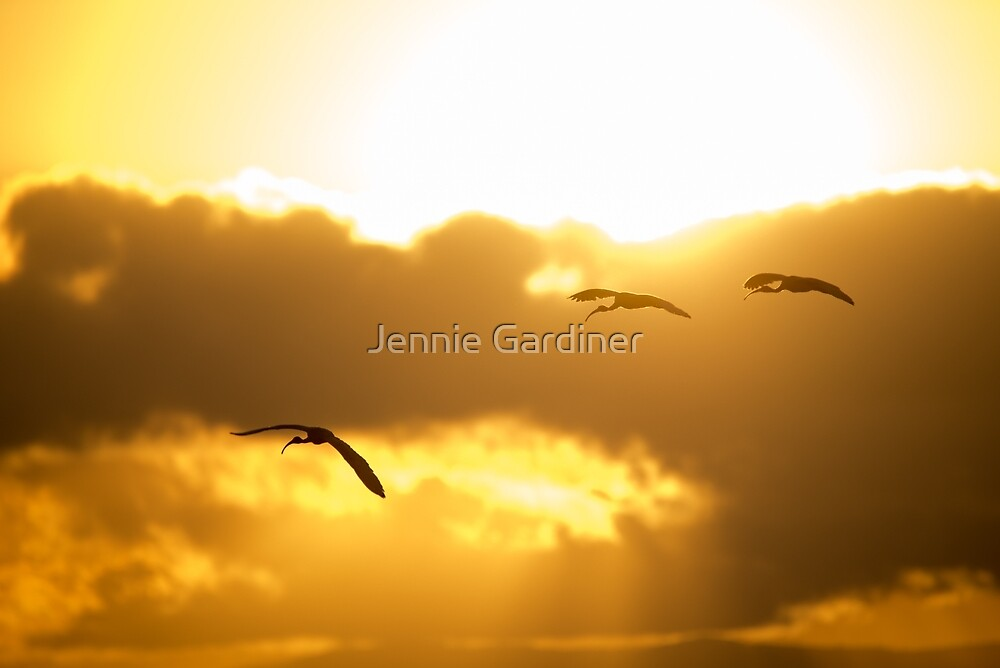 Into the Sun by Jennie Gardiner