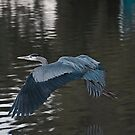 Great Blue Heron XIII by Marvin Collins