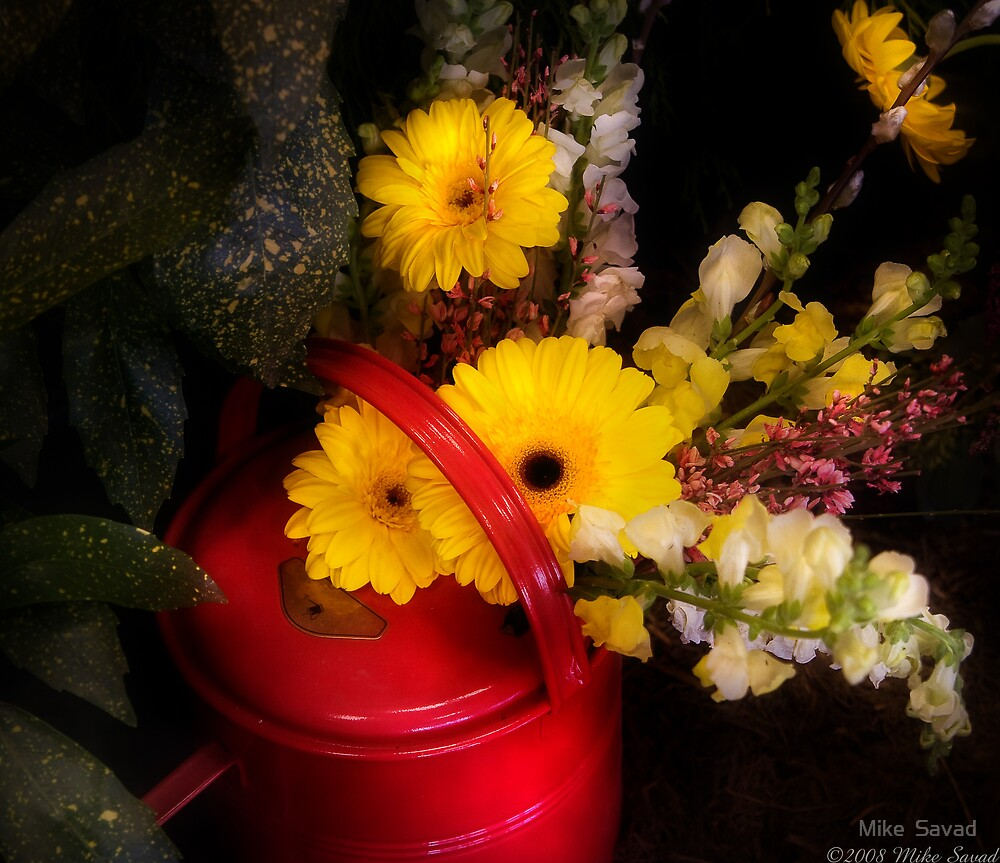 Watering Can Still life  by Michael Savad