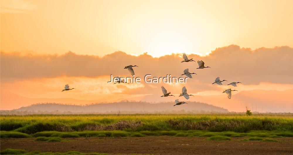 Sunset Glow by Jennie Gardiner